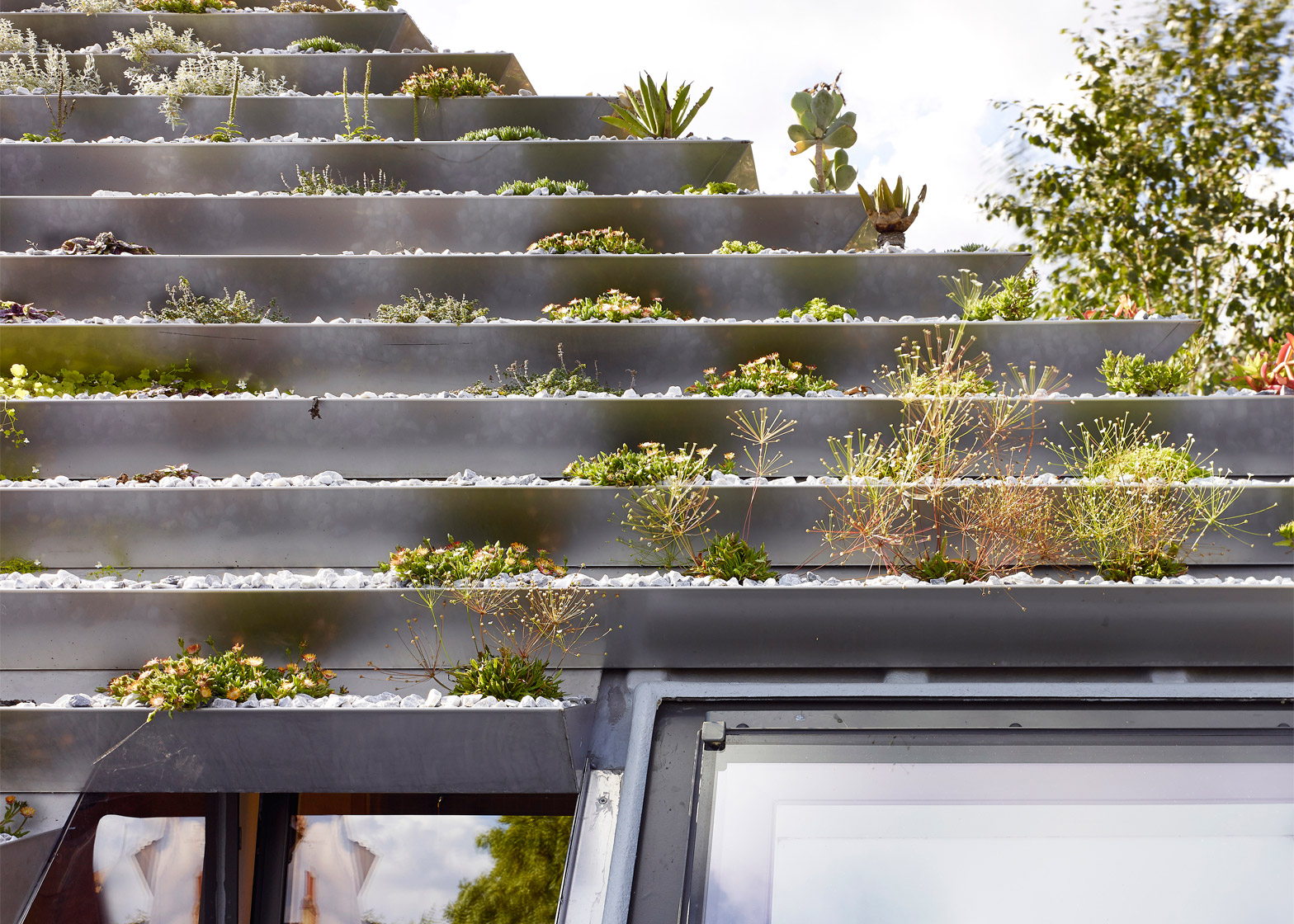 Plants for rooftop gardens - London Roof 7