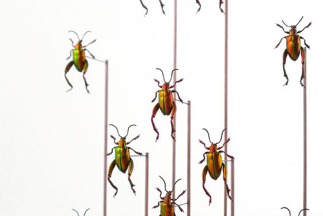 The Darwin Sect