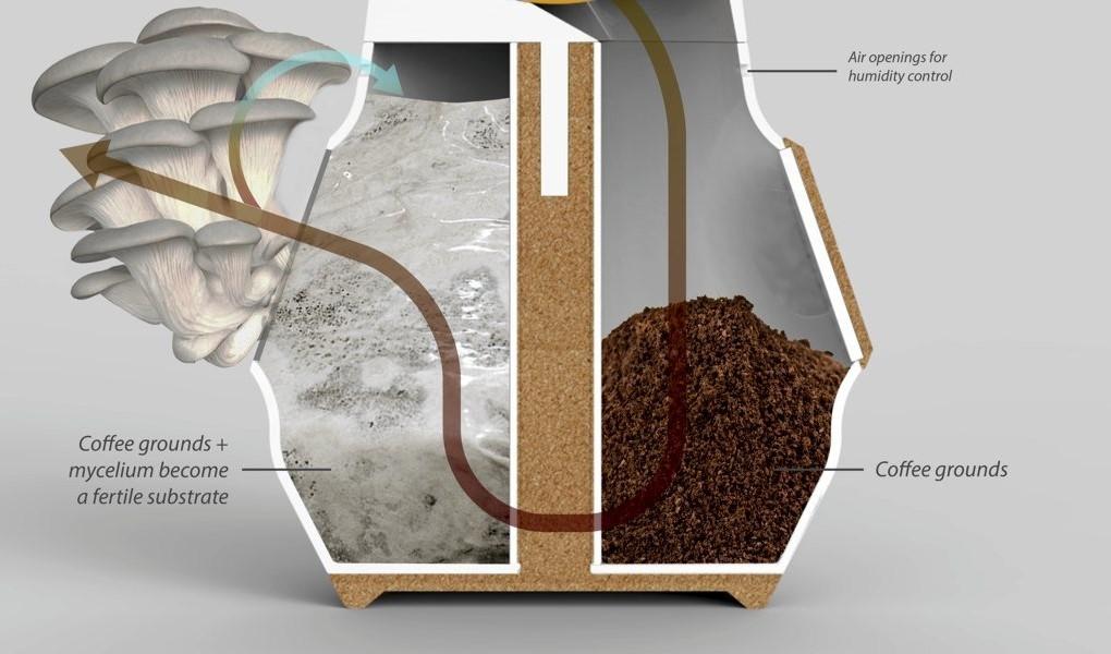 mushrooms coffee pot process