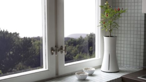 Botanium by window