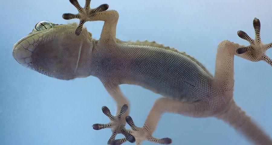 nanogrip gecko