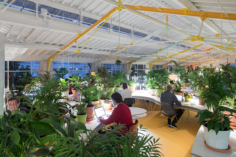 Breathing Easy At The Office Co Working Space Filled With