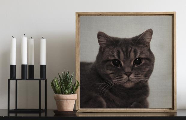 Custom Cat Speakarts