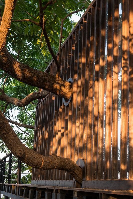 Tala Tree Resort - Trees