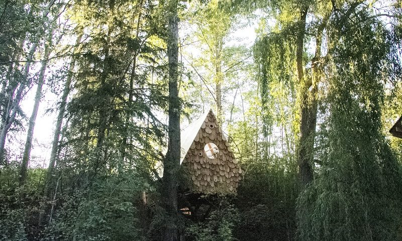 Bird Hut - Studio North
