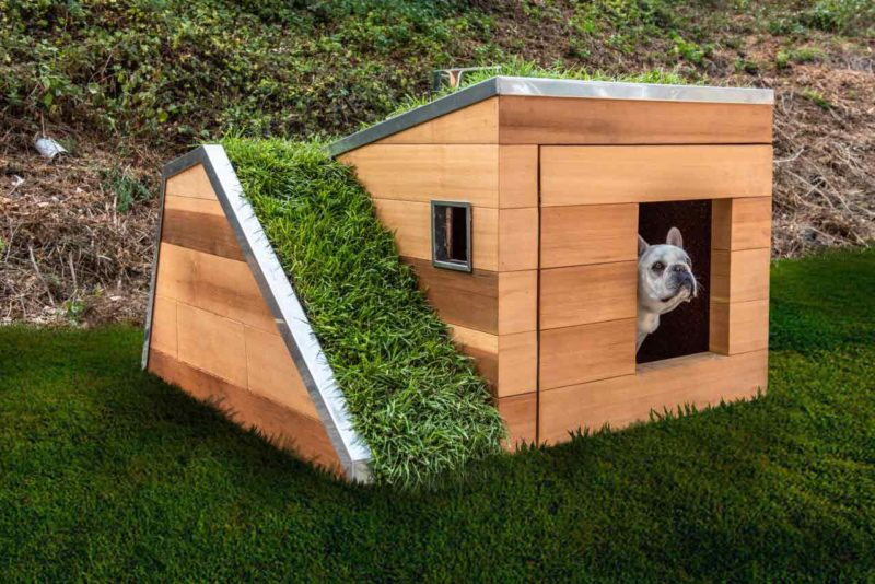 every puppy s dream modern dog house features a functional green roof